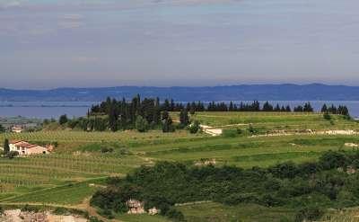 Allegrini Panoramic view La Grola Hill